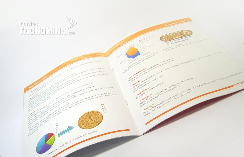 Mẫu Brochure - Profile 021